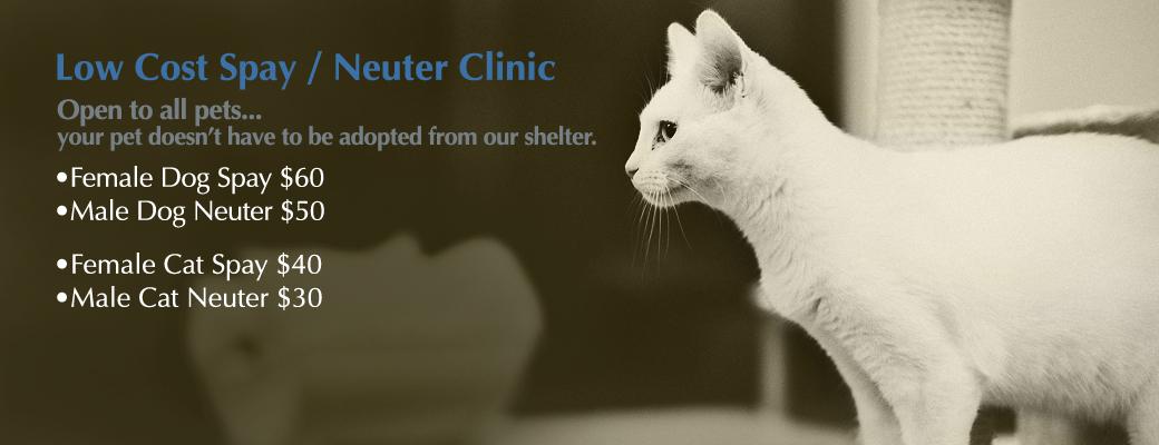 Spay / Neuter Clinic