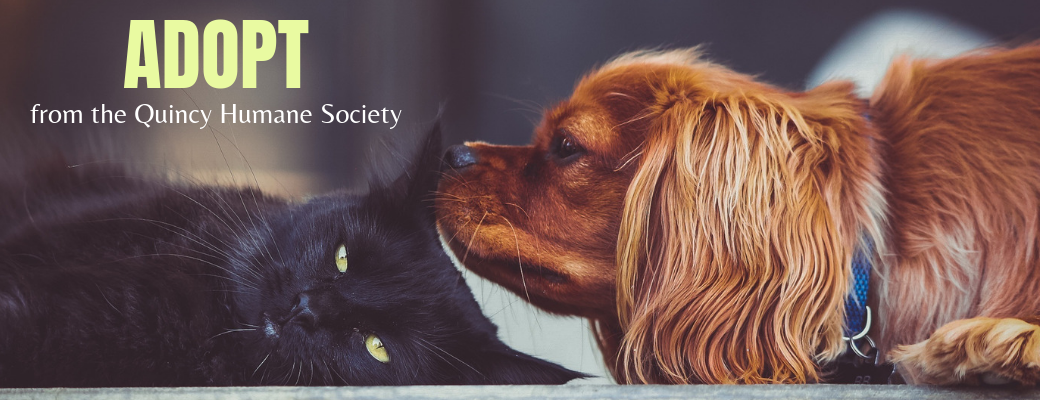 Quincy Humane Society — Saving Pets and Their People Since 1880
